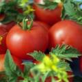 джина томат помидор