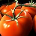 Tomat_long_kiper