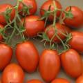 TomateTrossRomanaTyp