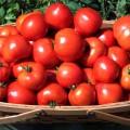 tomati ля ля фа