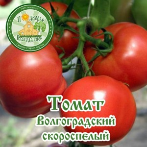Томат Волгоградский скороспелый-600x600