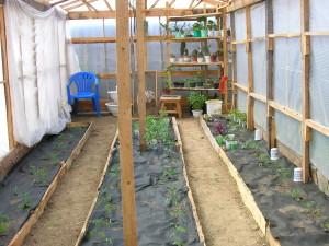 Мульчирование томатов в открытом грунте особенности выращивания помидоров на дачном участке