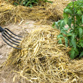 hay-mulching-drought-busters