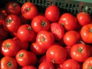 tomat-bobkat-f1-determinantniy-2500-nasinin_4db8961871774ca_300x300
