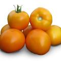 tomat_det_kitanoseeds_KS_18_F1