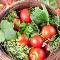 Pomidoryi-kvashenyie-v-kapuste