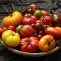 lyubim-novye-i-cenim-starye-sorta-tomatov