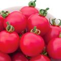 217732678_w640_h640_pink_paradajz