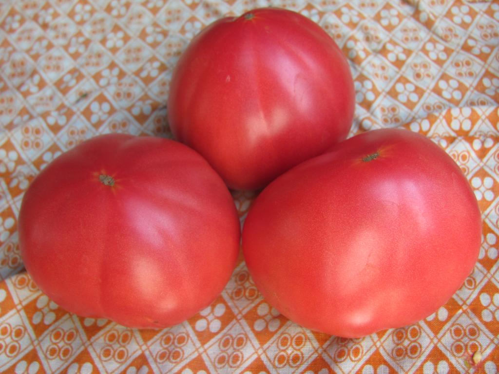 помидоры бабушкин секрет отзывы с фото