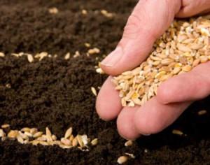 Выращивание рассады огурцов Образцовая Усадьба 21