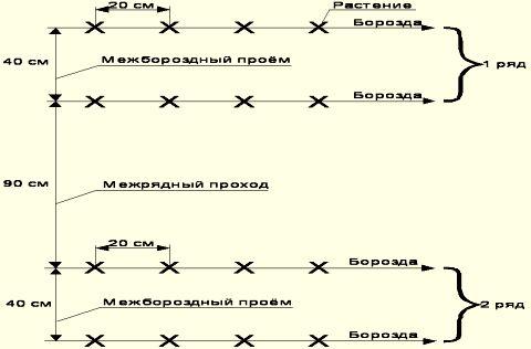 Shema-poseva-ogurechnyh-semjan2