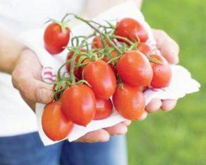 tomat (1)