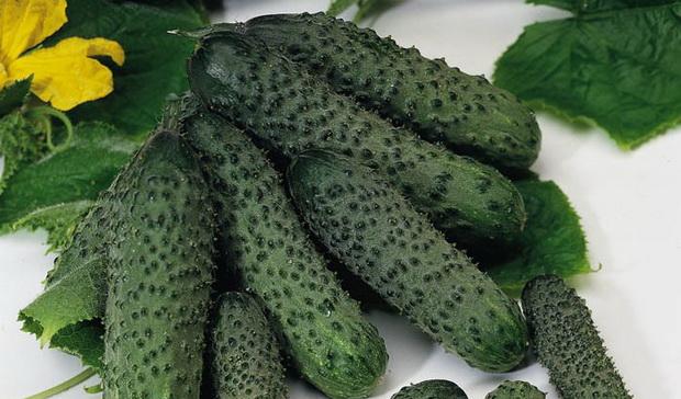 Огурец Пасалимо описание и характеристика сорта уход и урожайность с фото
