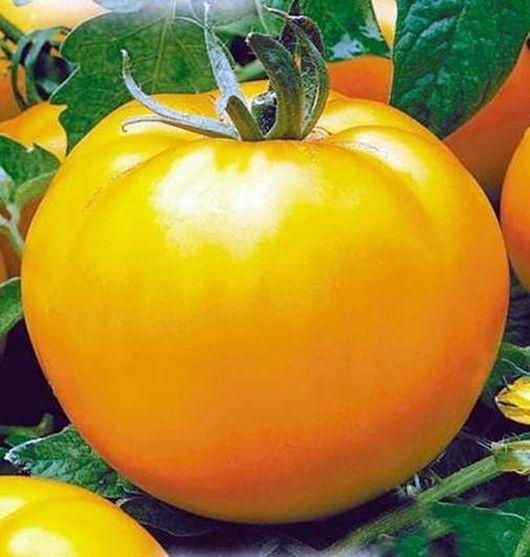 Томаты апельсин отзывы, фото, описание и характеристика сорта eТеплица
